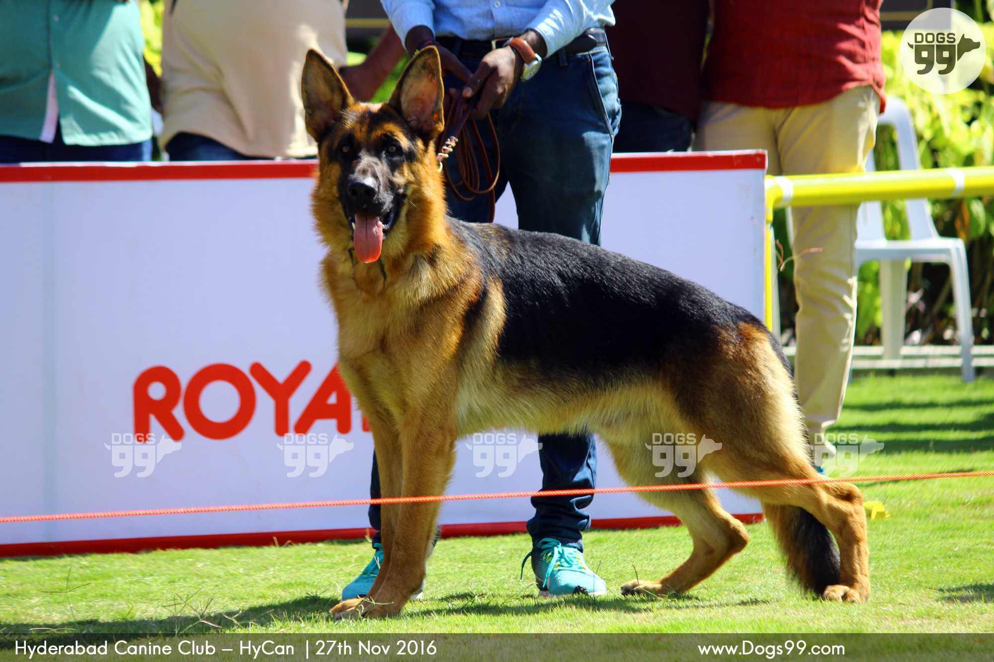 Upcoming Dog Shows In Hyderabad