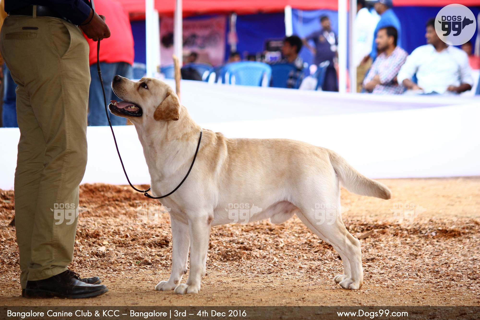 Upcoming Dog Shows In Bangalore