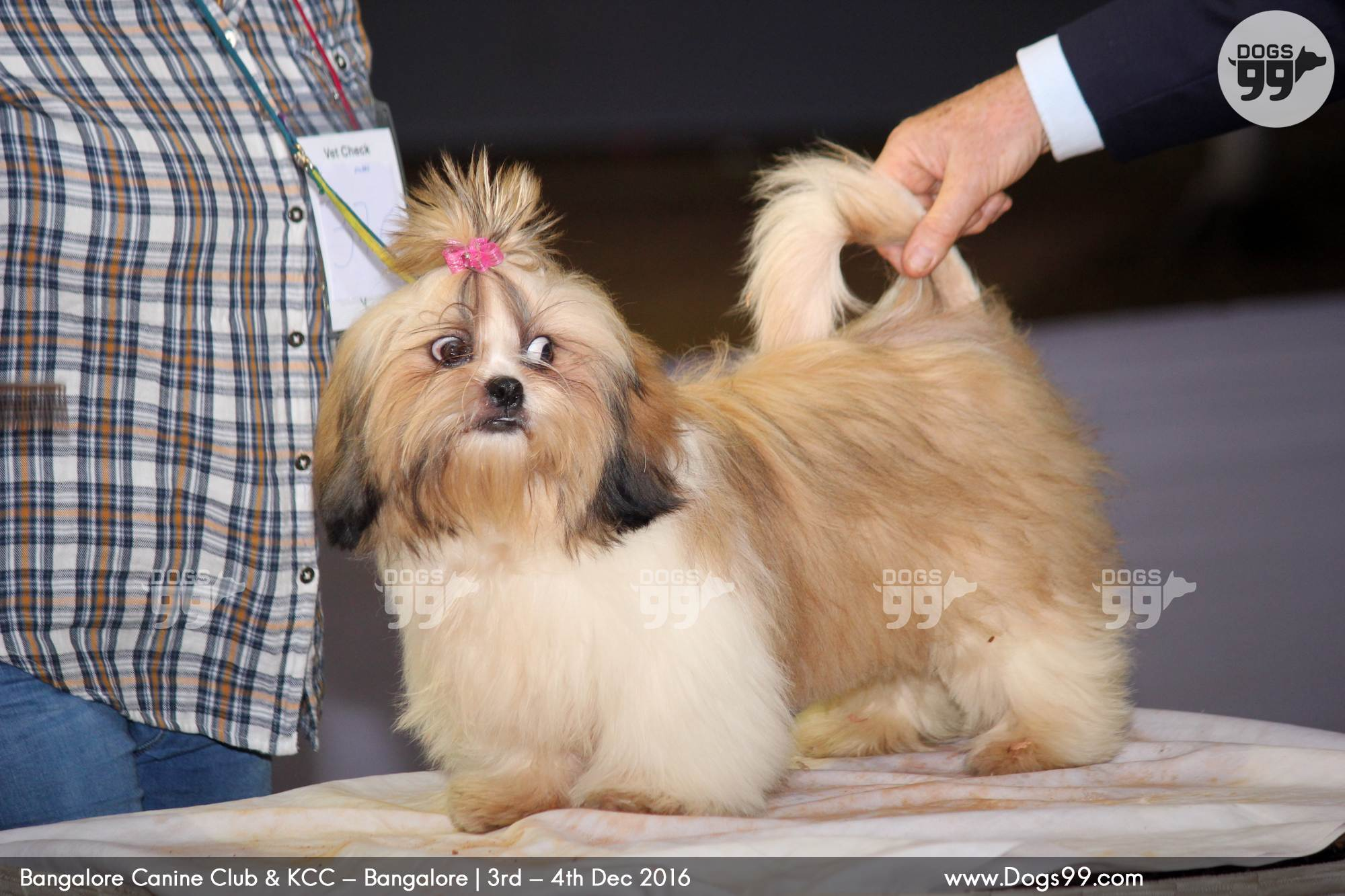 Best Dog Breeds For Home In Bangalore