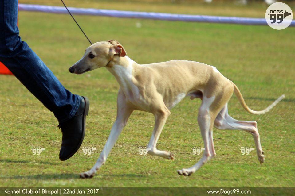 Kennel Design For Boxer Dog