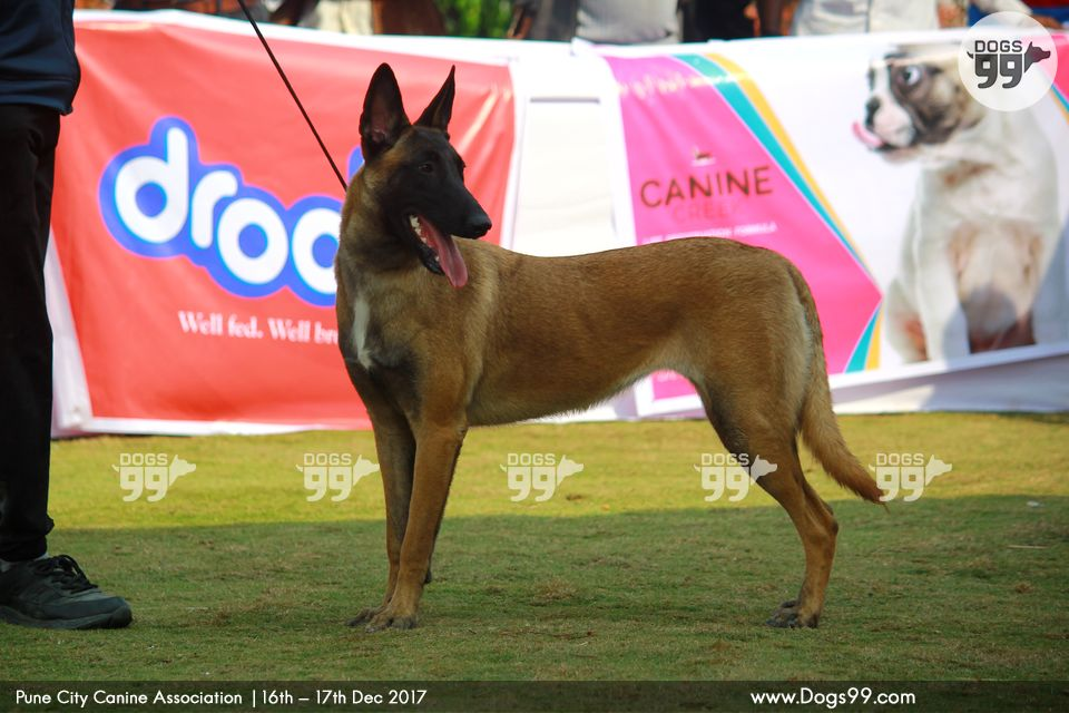 All Breed Championship Dog Shows