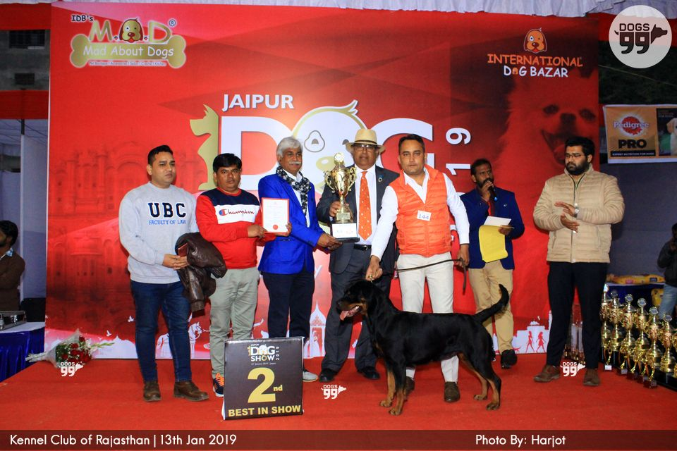 Jaipur Dog Show 2019 265 | Dog Shows