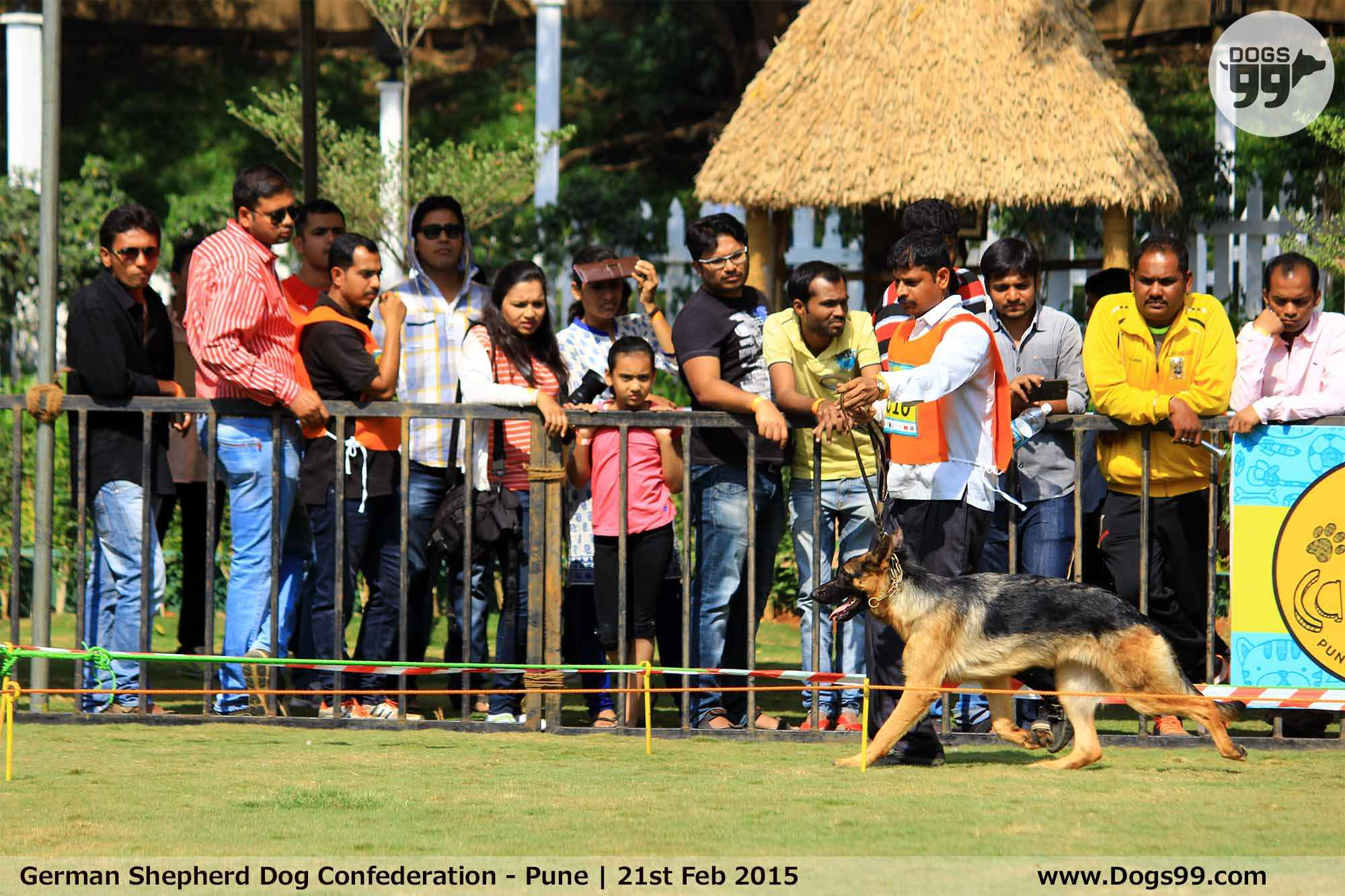 Dog Show In Pune