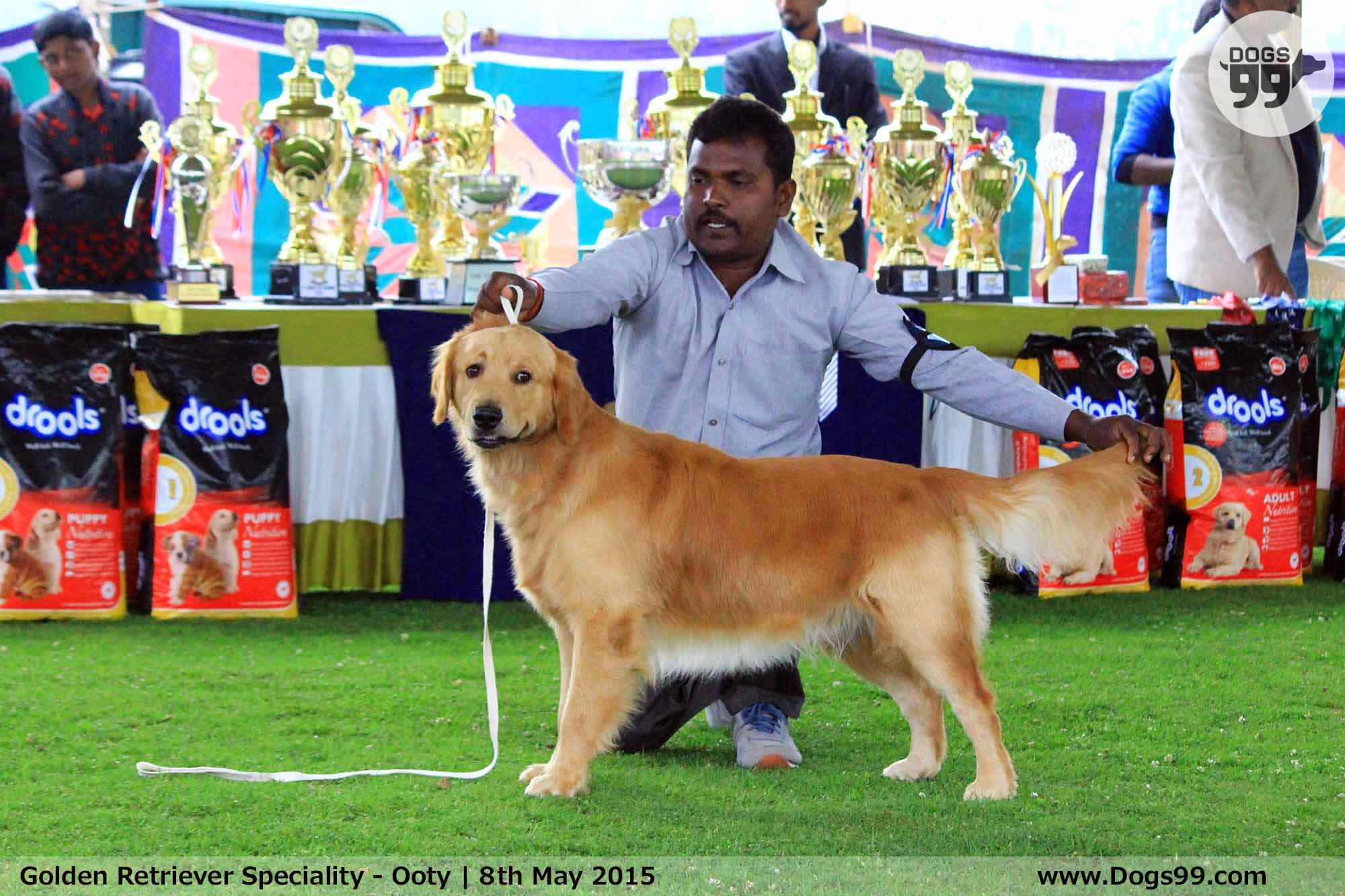 National Dog Show  Golden Retriever