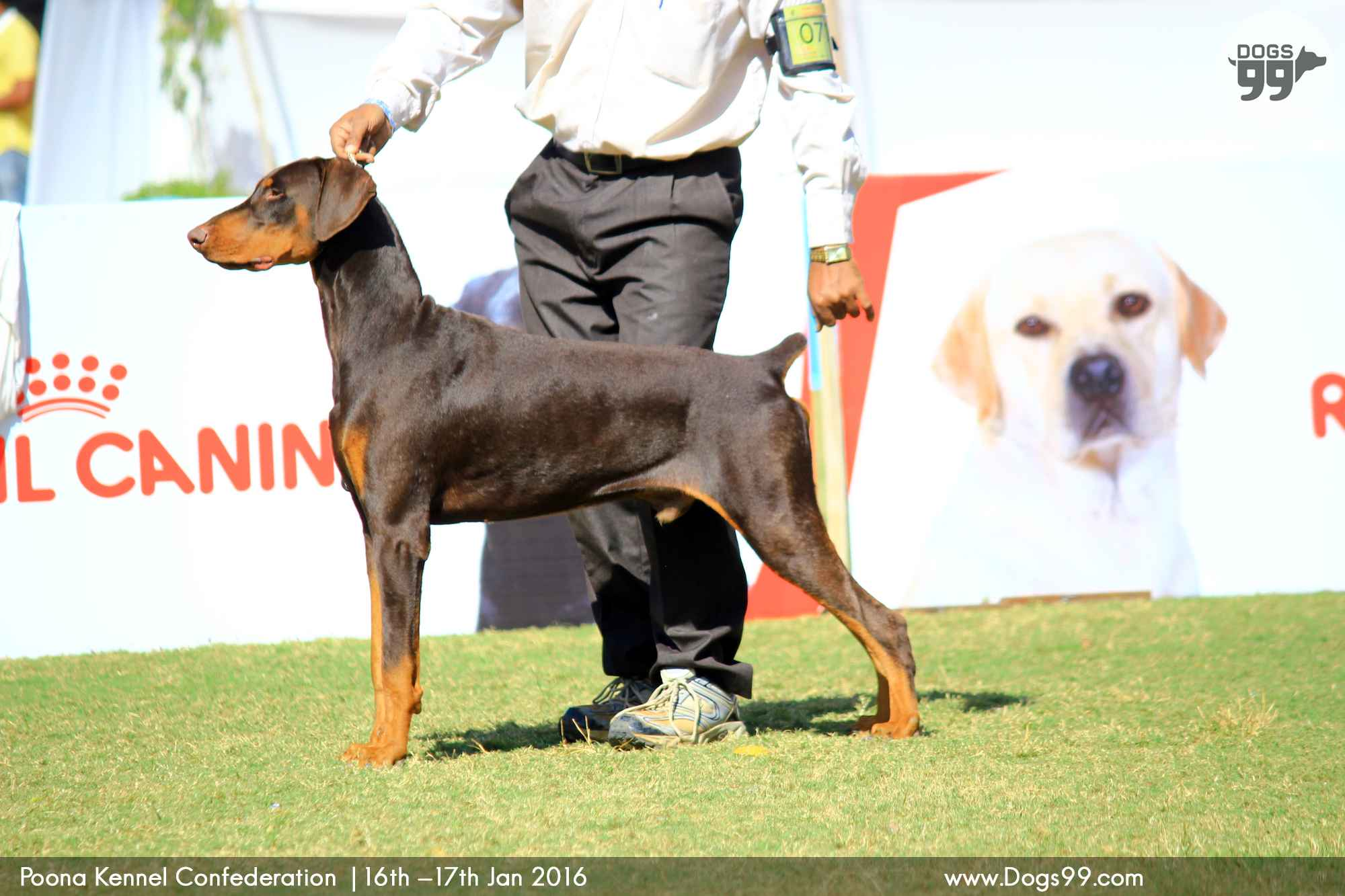Pune All Breed Dog Show Pkc 2016 79 Dog Shows