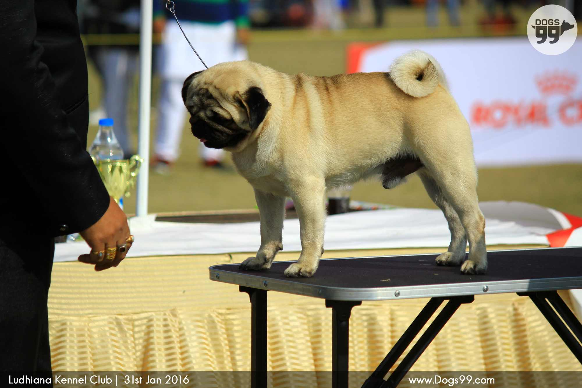 show dogs - photo #40