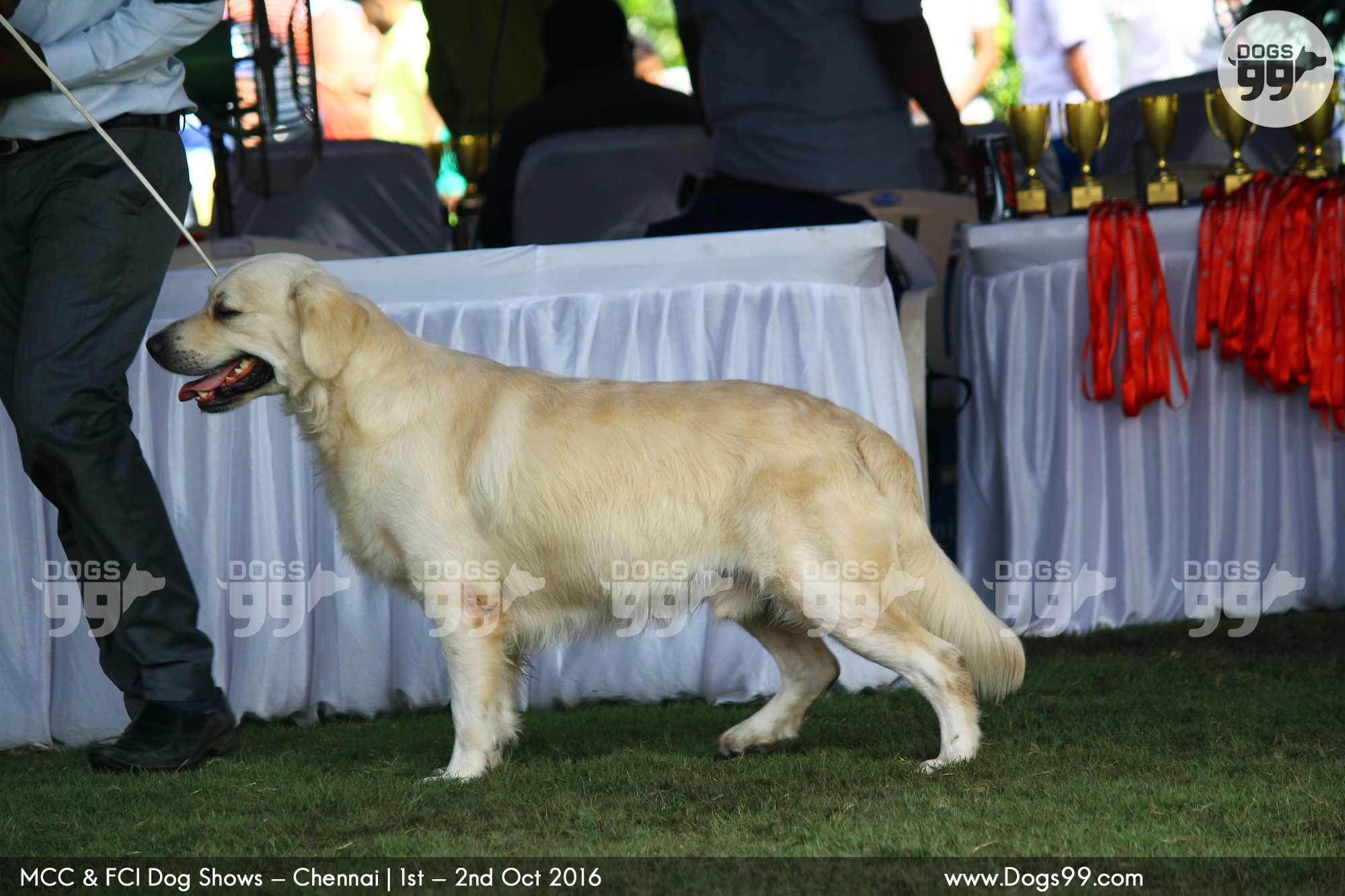 Madras Canine Club Dog Show