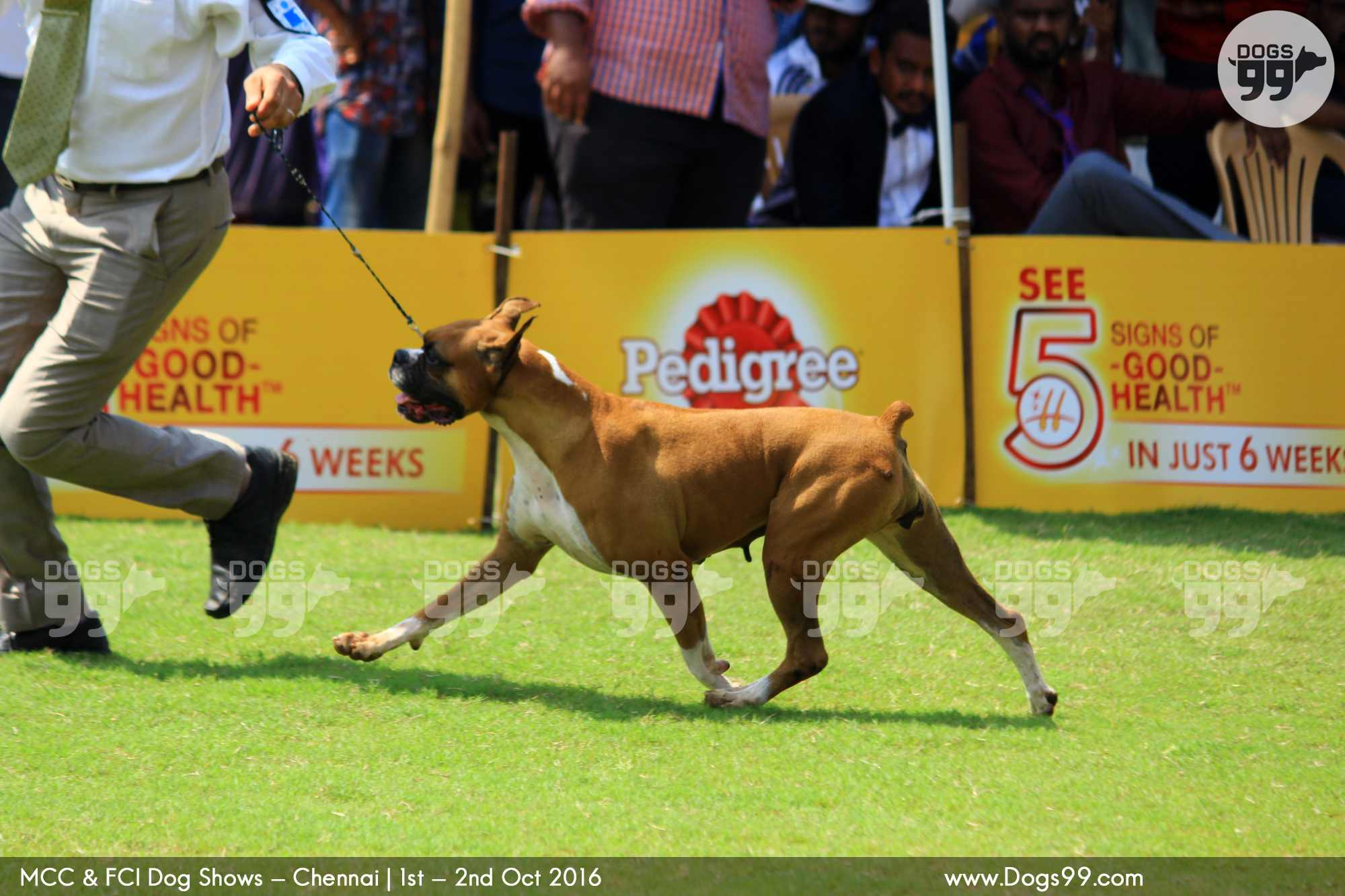 Upcoming Dog Show In Chennai